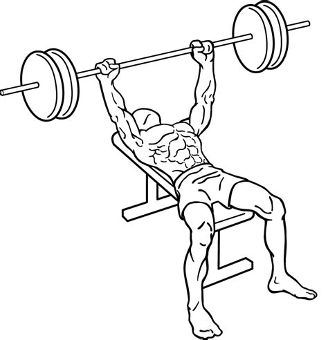 bench press work out bench press exercise add the king of chest exercises to your chest workout