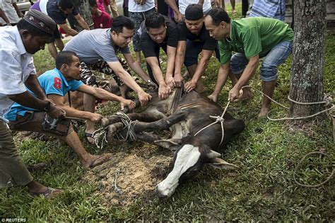 flik cuting dalymotion in pakistan muslims sacrifice cattle in celebration of eid al adha