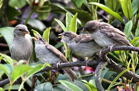 who s next feeding baby sparrows