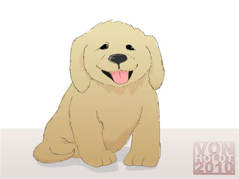 puppies for sale in northwest indiana doodle puppies for sale indiana breeds picture