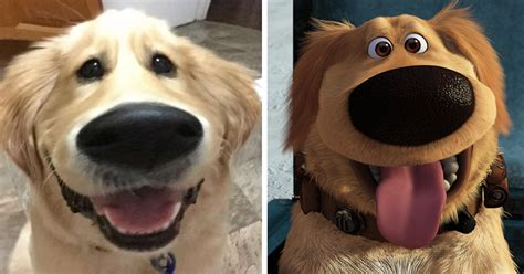 film up hond this snapchat filter makes your dog look like dug from up