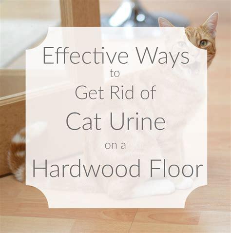 Effective Ways to Get Rid of Cat Urine on a Hardwood Floor