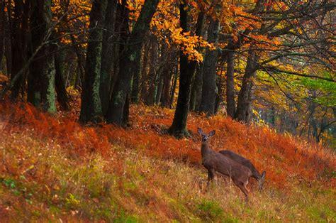 fall colors in virginia america the beautiful in autumn peak fall foliage dates