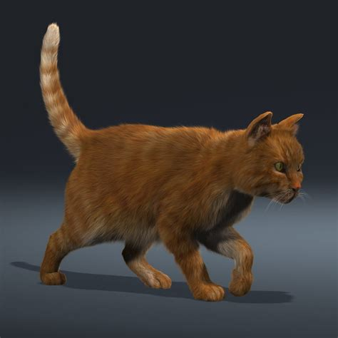 3d Cat 3d model cat orange tabby fur