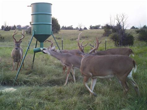 what can i feed the deer in my backyard what can i feed the deer in my backyard 100 images
