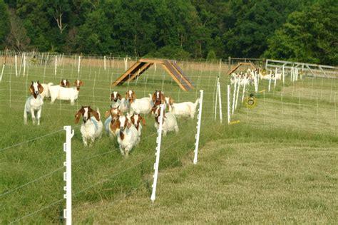decreasing barber pole populations  grass pastures