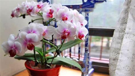 far fiorire orchidee orchidee 7 consigli semplici ed efficaci per farle rifiorire