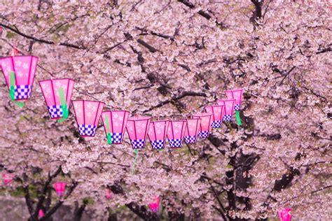 cherry blossom festival cherry blossoms hanami festival