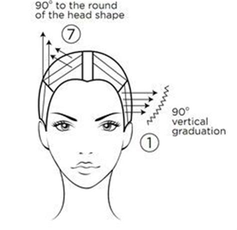 diagram of hair cuts from the 60 54 best images about hair cutting diagrams on pinterest