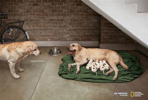 Print ads 2012 galleryhip com the hippest galleries