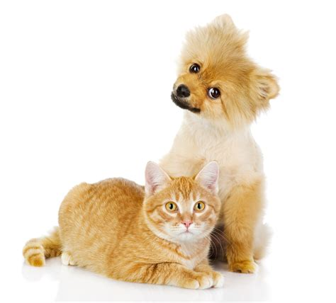 dogs and cats cat or for the family pet the 3 deciding considerations