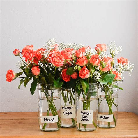 Make Roses Last Longer In Vase by How To Care For Flowers And Make Them Last Longer Huffpost