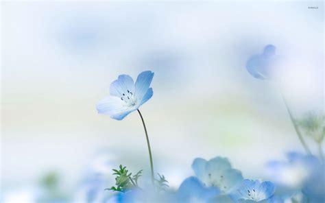 wallpaper blue floral small blue flower wallpaper flower wallpapers 53407