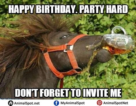 Horse Birthday Meme - horse memes