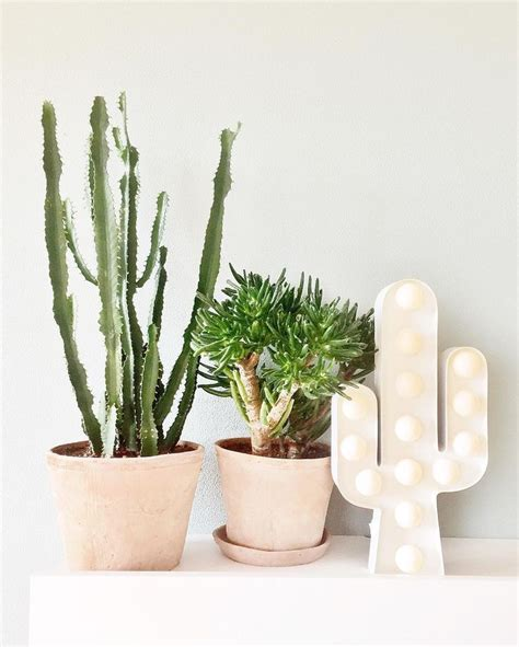 Cactus Marquee Light Lu Kaktus 89 best hema images on bedrooms cactus l