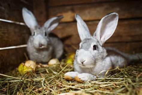 Hasen Im Garten by Hasen Kaninchen Im Garten Halten Hausgarten Net