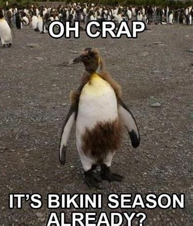 New Funny Memes 2016 - funny animal memes 2016 image memes at relatably com
