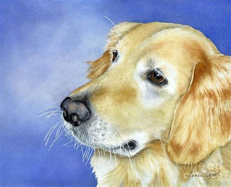 golden retriever baton 775 best golden retriever images on drawings colors and draw