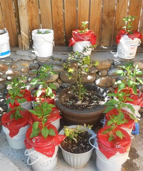 diy self watering planter self watering planters diy containers to combat drought