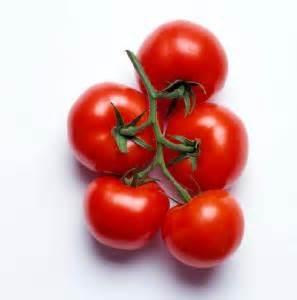 hydroponic gardening tomatoes avocados love hydroponics