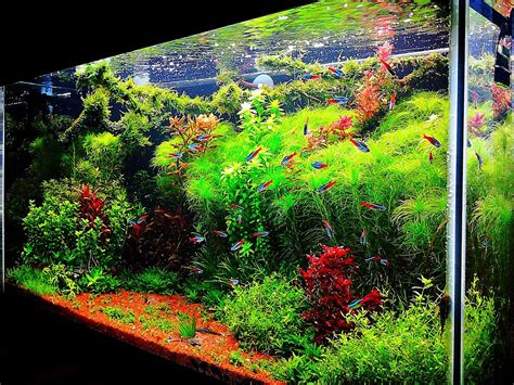 aquascape tank for sale fish tank ideas interior design the unique of