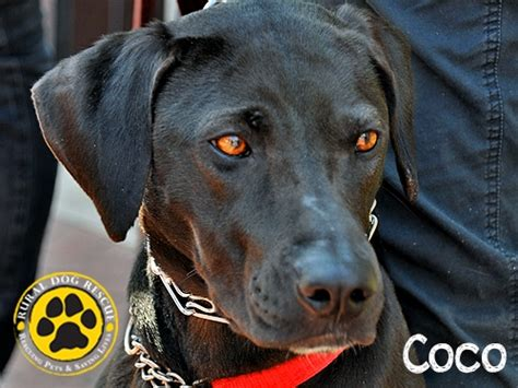 rural rescue your monthly adoptable animal fix popville
