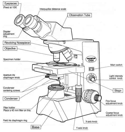 Parts Of A Microscope Worksheet Answers by Microscopes Parts Quiz Images