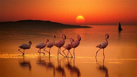 Flamingo Sunset original size of image 913844 favim