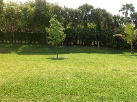 Tree In Backyard by Garden For Gardening