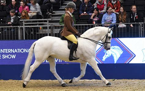 slievebloom equestrian pequenos em tamanho mas grandes em beleza flashes dos