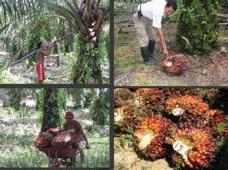 Minyak Kelapa Sawit Curah 301 moved permanently
