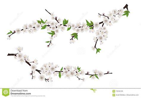 rami di fiori rami di albero di fioritura della primavera con i fiori