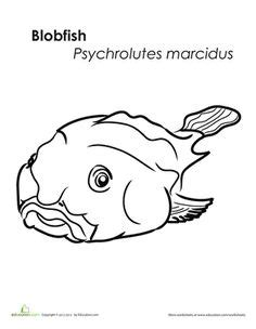 coloring pages of a blob fish this blobfish was just voted the world s ugliest animal