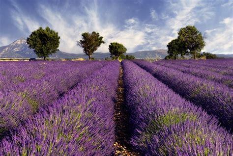 fototapete lavendel fototapete lavendel vlies news ch shopping