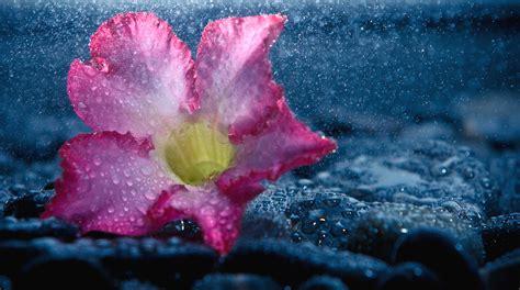 love boat theme hd rain full hd wallpaper and background image 2560x1426