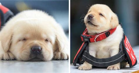 Home Design Challenge police recruits new puppies and the internet is having