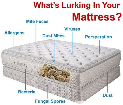 How To Clean The Bed Mattress by Mattress Cleaning Mighty Clean Carpet Care