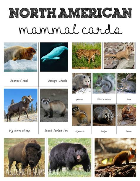 printable animal articles north american mammals cards for montessori activities