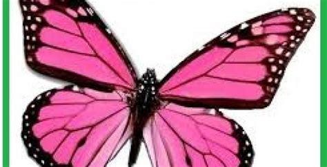 imagenes con mariposas bonitas imagenes de mariposa hermosas animadas imagenes de mariposas