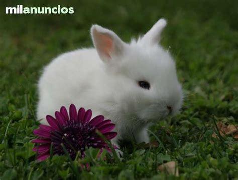 imagenes de un animal 134 best fotos de animales images on pinterest animal