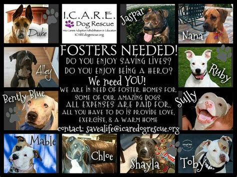 foster homes for dogs pin by peck on foster homes needed