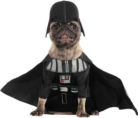 pug darth vader costume the most popular costumes for pets from wars to minions today