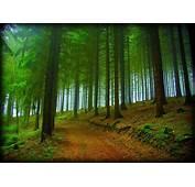 HD Forest Trees Road Nature Fog Free Desktop Background