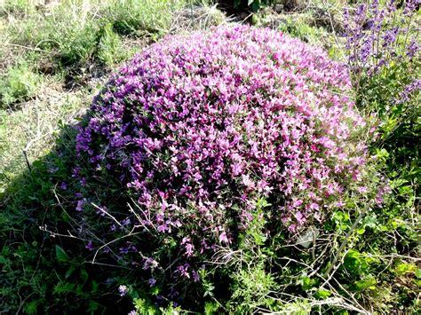 Blumen Im Mai 4777 by Blumen Im Mai Blumen Im Mai Susi Testet Und Bloggt Maigl