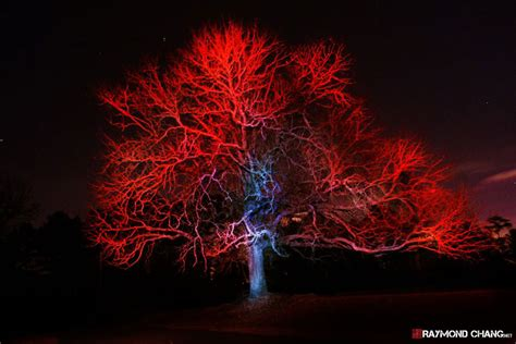 how to photograph a tree with lights 12 04 2012 the tree light painting raymond chang