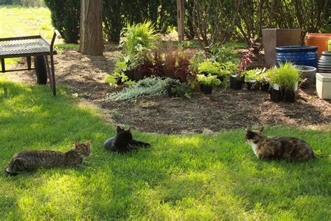 the cats of atlock farm fine gardening