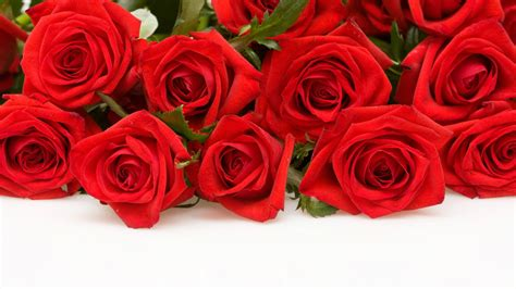 wallpaper for desktop roses most beautiful red roses hd wallpapers flowers pictures