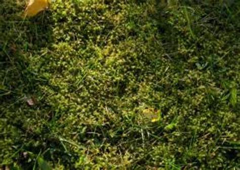 Was Tun Gegen Moos Im Rasen 6931 by Rasenpflege Schnelltipps Unkraut Und Moos Im Rasen