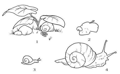 garden snail coloring page the life cycle of a snail free coloring pages