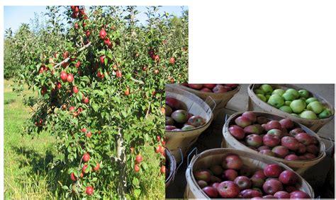 j q fruit farm apples